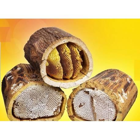 Antioch Hatay Natural Karakovan Comb Honey