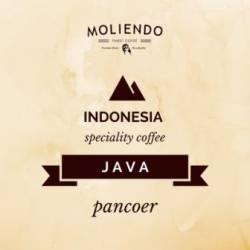 Moliendo Indonesia Java Pancoer Regional Coffee