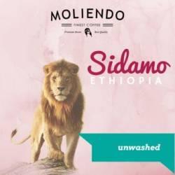 Moliendo Ethiopia Sidamo Gr 4 Dry Processing Regional Coffee